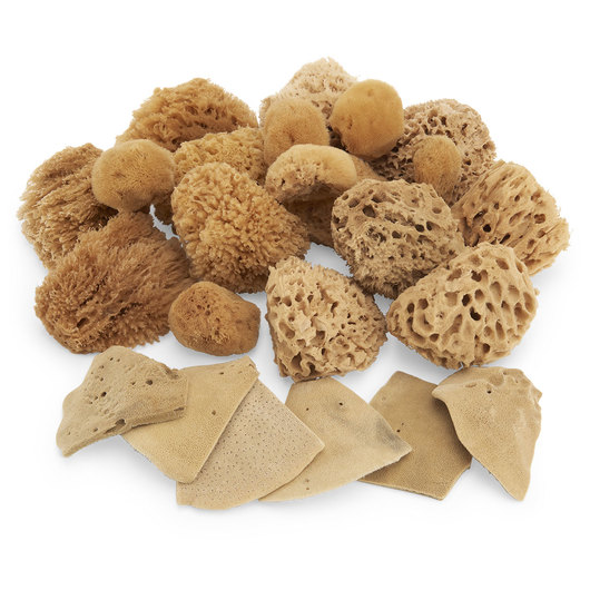 Natural Sponge Classroom Assortment - Set of 24