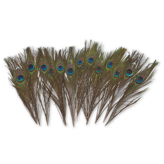 Exotic Peacock Eye Feathers - Pkg. of 12