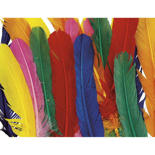 Wing Feathers Multicolor Pack