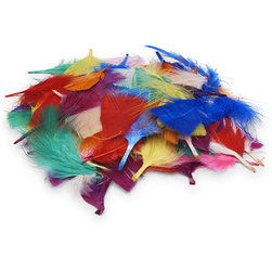 Plumage Feathers