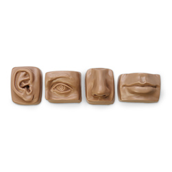 Nasco LifeSize Anatomical Facial Set