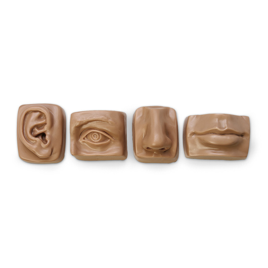 Nasco Life-Size Anatomical Facial Set