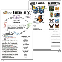 ARTastic® Butterfly Life Cycle TearPad™ Only - 50 Sheets - 11 in. x 17 in.