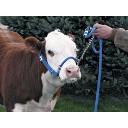 Breaking, Training, 3-in-1 Halter