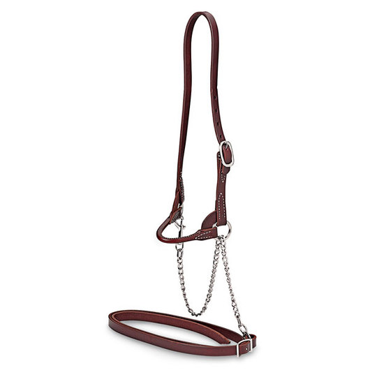 Single-Buckle Slimline Round Strap Show Halter - Calf, Chocolate