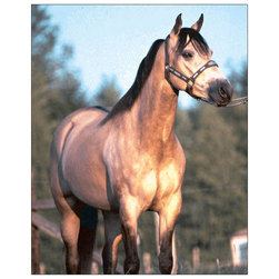 How to Judge Halter Horses - DVD