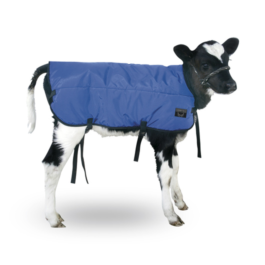 Double-Insulated Calf Blanket - 30 L x 29 W, Blue