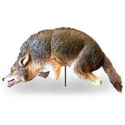 3-D Coyote Decoy
