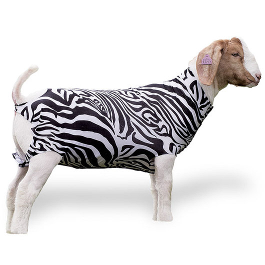 Weaver® Patterned Spandex Goat Tube - Animal Print, Large (110-140 lbs.)