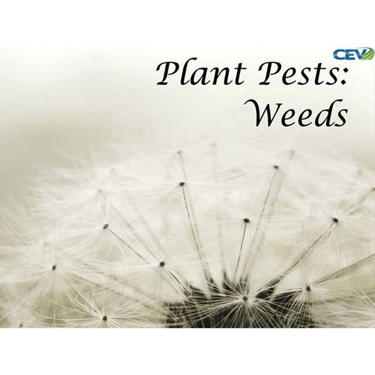 Plant Pests: Weeds PowerPoint®