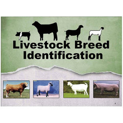Livestock Breed Identification PowerPoint CD-ROM