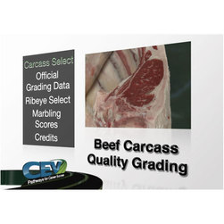Beef Carcass Quality Grading DVD