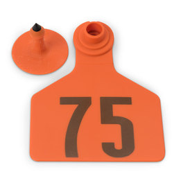 Z2 No-Tear-Tags™ Two-Piece Ear Tags, Large Size - 2-1/2 in. x 3-1/4 in. - Orange - Numbers 51-75