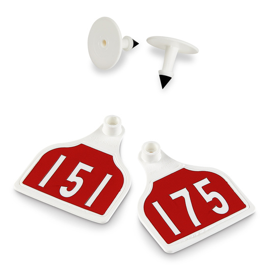 CAL TAG EZCee Animal Identification Tags - Calf Size - 3 in. L x 2-1/4 in. W - Numbers on 1 Side - Numbers 151-175 - Package of 25 - Red Tag over White Base
