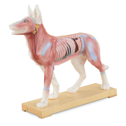 Acupuncture Models - Dog