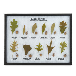 Oak Collection Leaf and Seed Display Mount