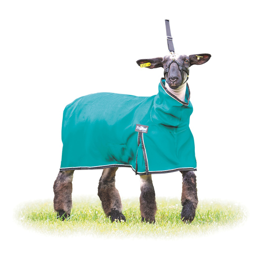 Weaver® Procool™ Mesh Sheep Blanket - Teal - Large