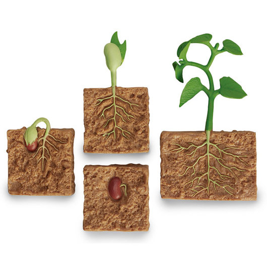 Incredible Creatures® Set - Life Cycle of a Green Bean Plant