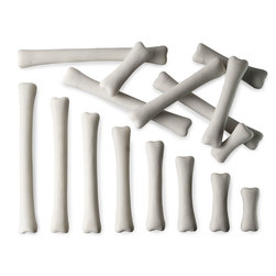 Dinosaur Bones Match and Measure Set: Bones