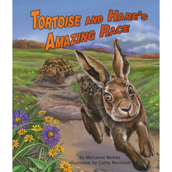 Tortoise and Hares Amazing Race