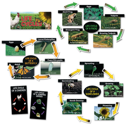 Life Cycle Mini Bulletin Board Set