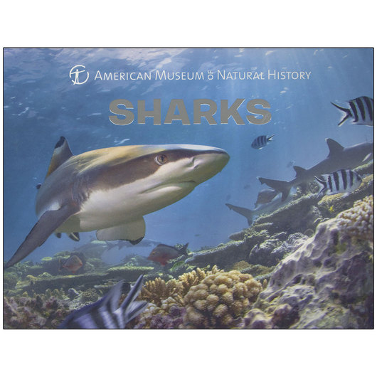 Sharks Board Book