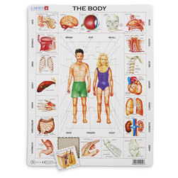 The Body Educational Jigsaw Puzzle