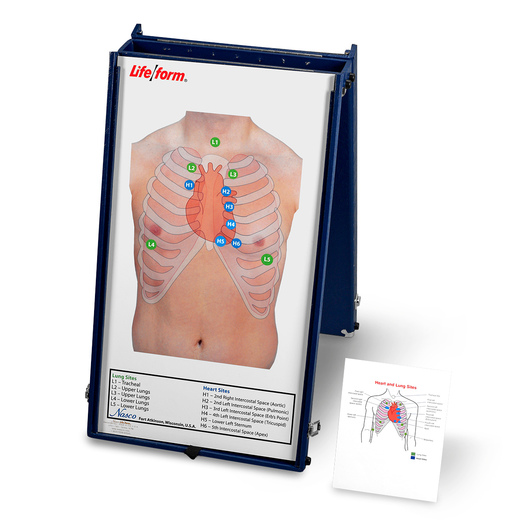 <strong>Life/form®</strong> Anterior Auscultation Practice Board with Case Only