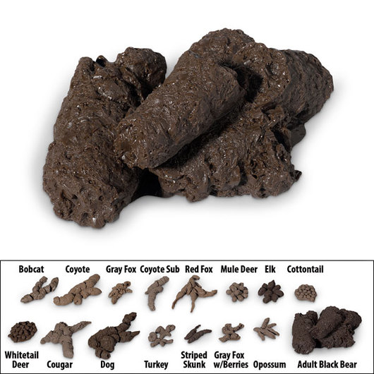 North American Bear Center  Scat  Droppings
