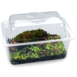 BioQuest Mini Forest Floor Kit