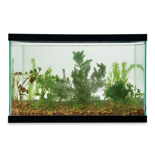 Aquatic Plant Set for 15 to 20 Gallon Aquarium, Live Specimen
