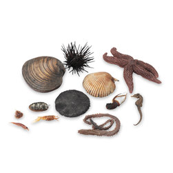 Animals of the Seashore, Preserved