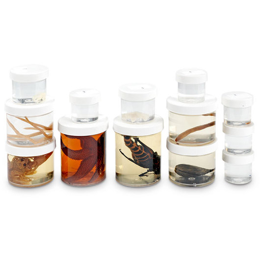 BioQuest® Hands-On Invertebrate Study Set - Replacement Specimens, Preserved