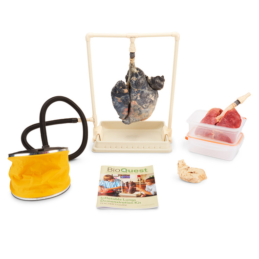 BioQuest® Inflatable Lungs Comparison Kit - Preserved