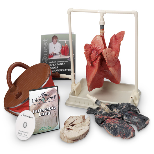 BioQuest® Inflatable Lung Comparison Kit and Teacher Instructional DVD, Preserved