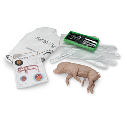 Nasco Try It Dissection Kit, Preserved