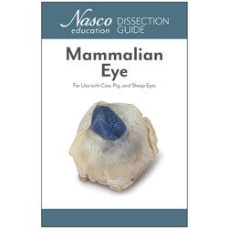 Student Mammalian Organ Dissection Guide, Eye