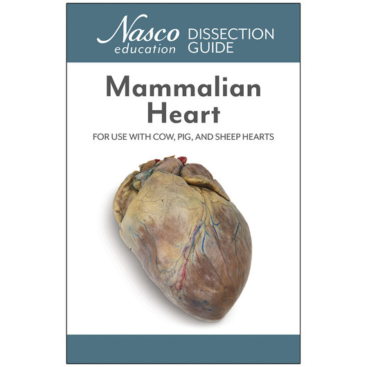 Student Dissection Guides - Mammalian Heart