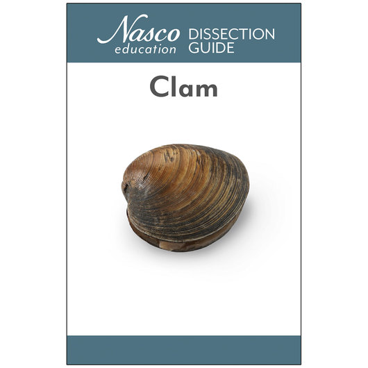 Clam Dissection Guide