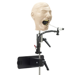 XRay Dental Manikin