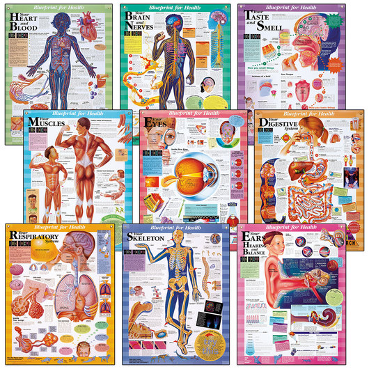 Blueprint for Health Charts - 20 x 26 - Set of 9