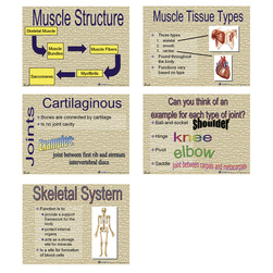 Skeletal/Muscular Systems Microsoft® PowerPoint® Presentation
