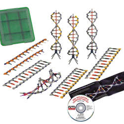 K'NEX® Education Set, DNA, Replication & Transcription