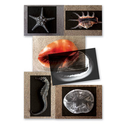 Shell X-Rays and Picture Cards