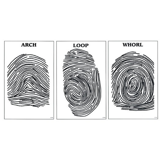 Nasco Fingerprint Posters - Set of 3