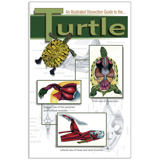 An Illustrated Color Dissection Guide to the Turtle