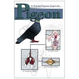 An Illustrated Dissection Guide, Pigeon