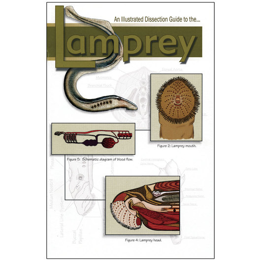 An Illustrated Dissection Guide to the Lamprey