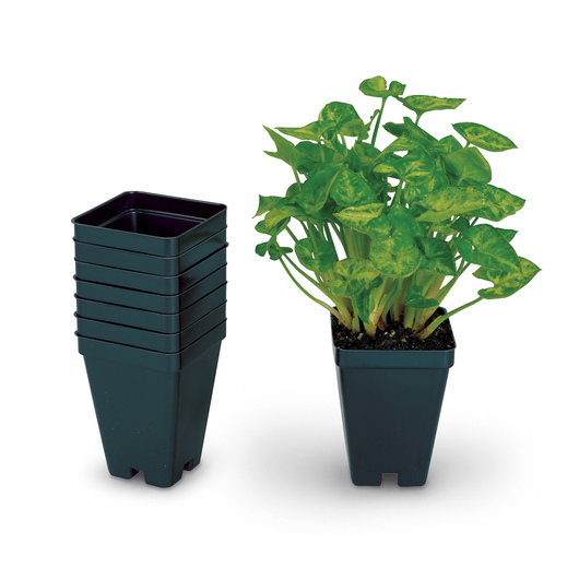 Set of 32 Vacuum-Formed Square Pots Without Tray - 2-1/2 in. L x 2-1/2 in. W x 3-1/2 in. D