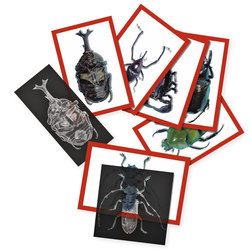 Roylco® Insect X-Rays and Picture Cards™